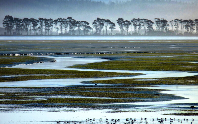 A photo of a vista of Humboldt Bay