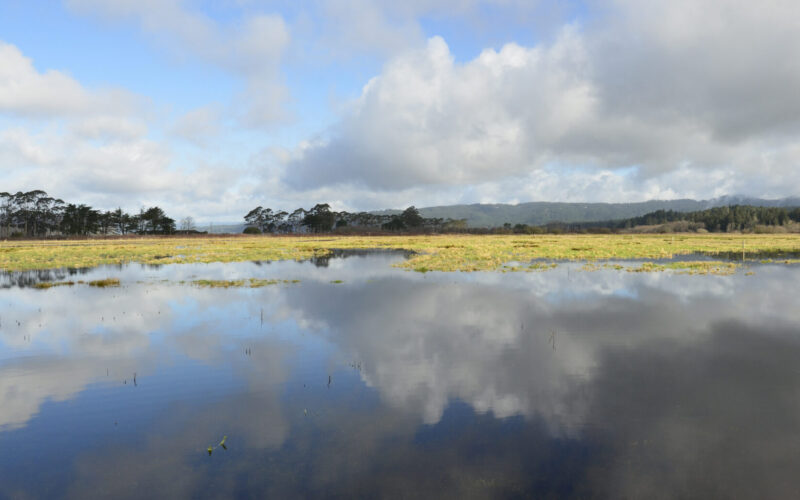 A photo of Fay Slough in a King Tide