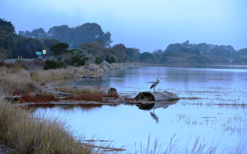 A photo of Humboldt Bay